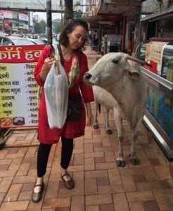 judith-and-the-cow_India