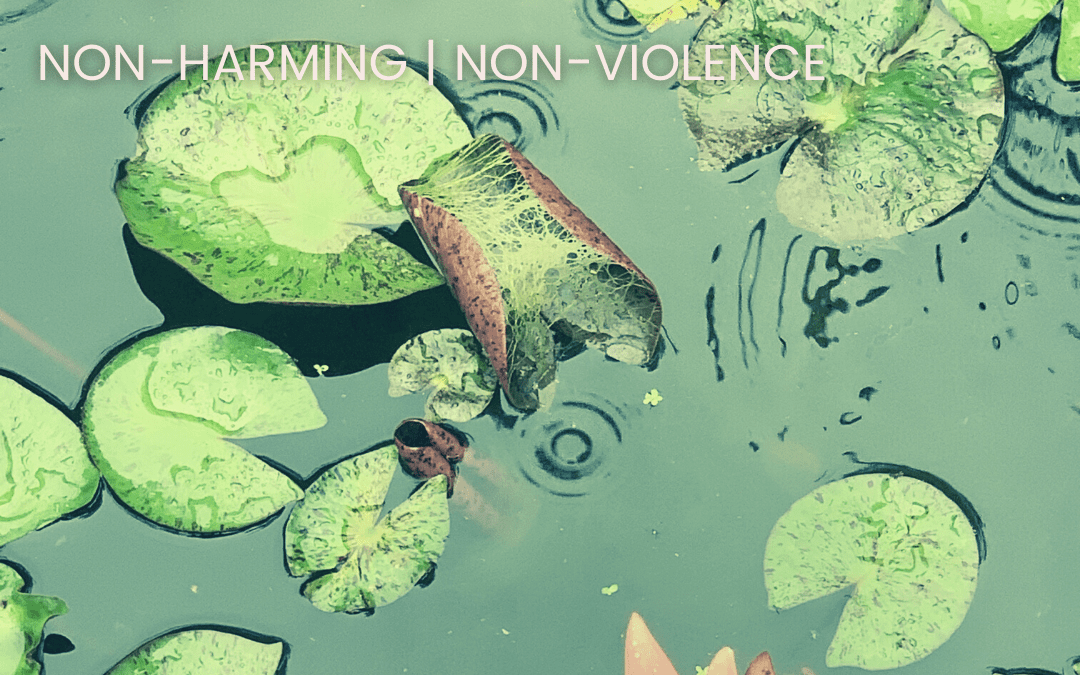 This week, we begin with the practice of non-violence, or ahimsa
